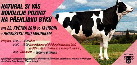 Prehlidka_byku